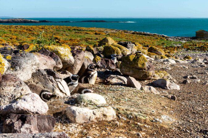 Deseado - Isla Pingüino
