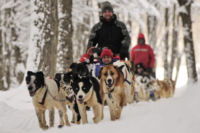 Disfrutando de paseo en trineo tirado por perros