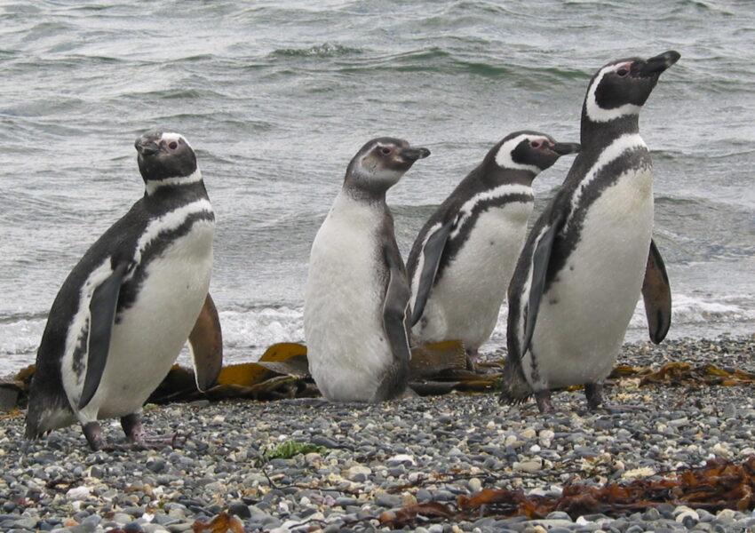 USH- Navegación Pinguinera