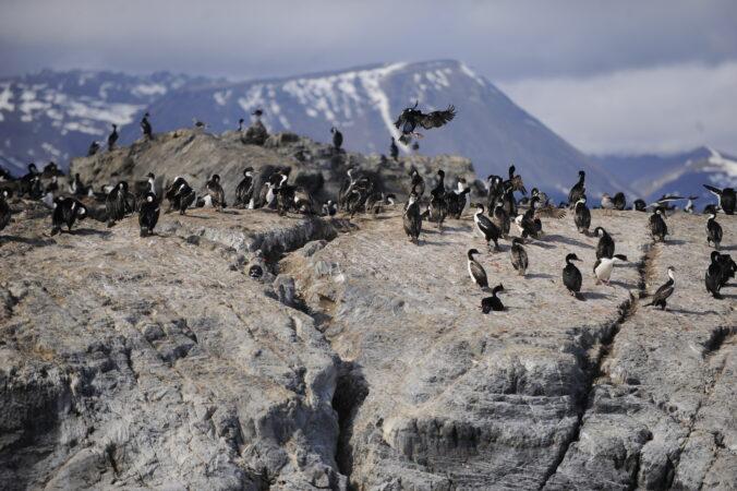 Navegación Beagle Isla de Aves