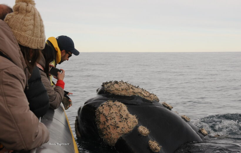 Navegación para Avistaje de Ballenas