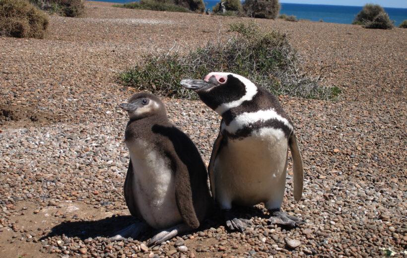 Puerto Madryn, Península Valdés y Punta Tombo